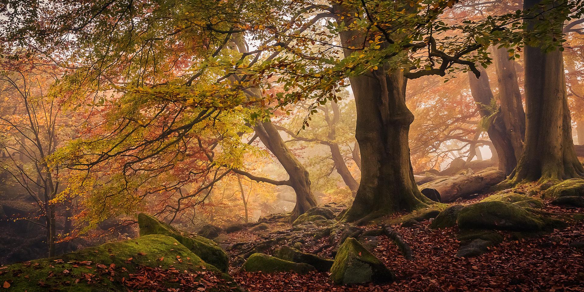 Padley trees