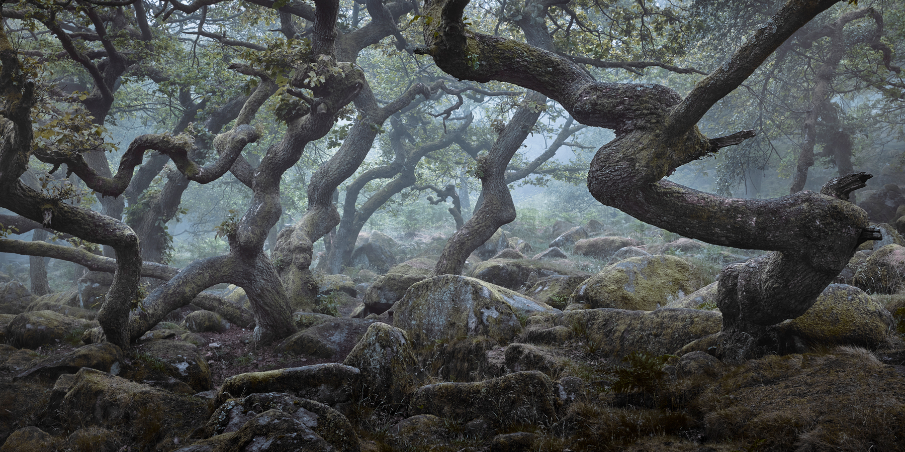 Padley Gorge - Twisted Oaks